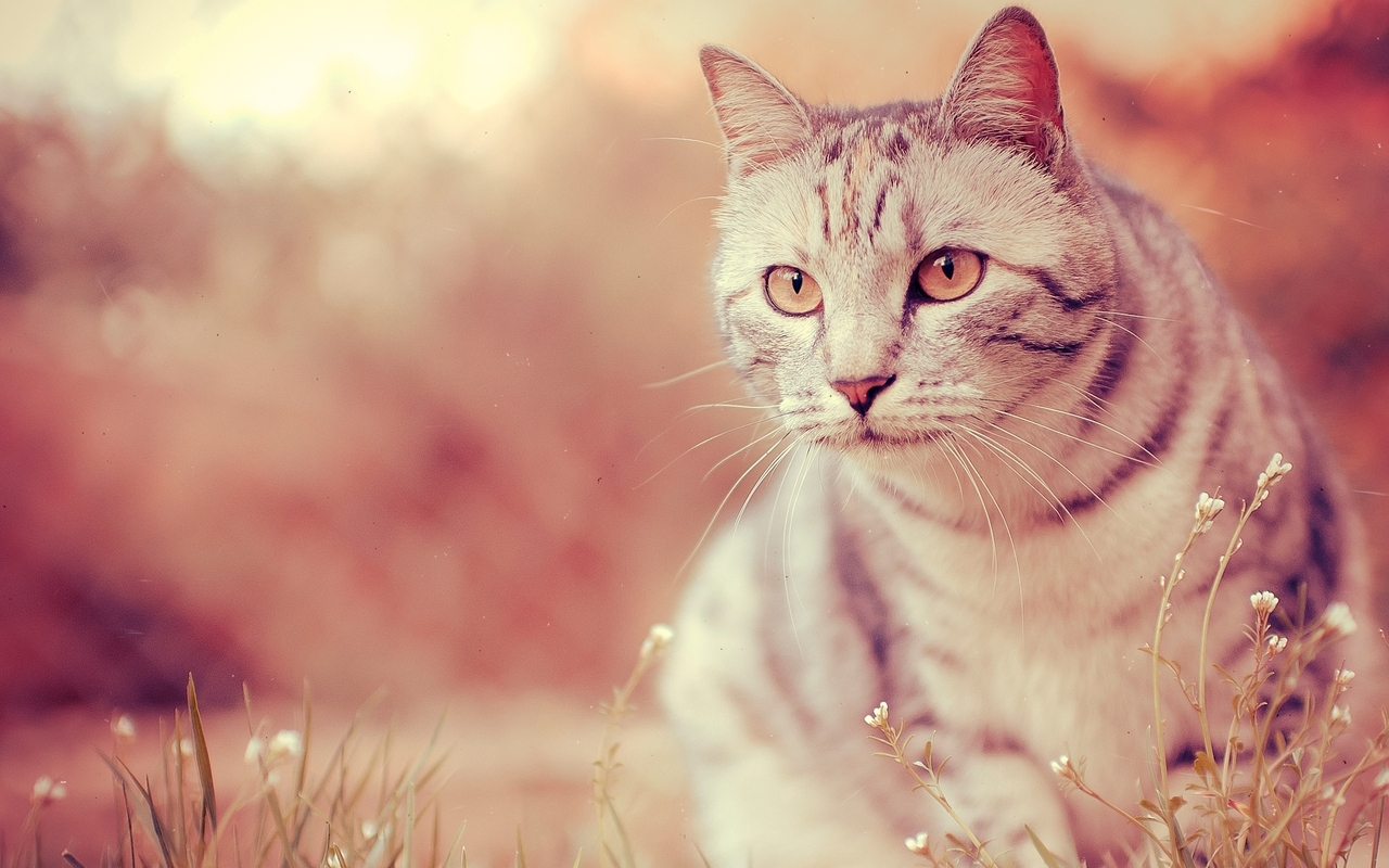 Free Download Download Cool Cat Wallpaper Wallpapers 1280x800 For Your Desktop Mobile Tablet Explore 72 Cool Cat Backgrounds Cool Desktop Wallpapers Kitten Wallpapers Free Download Xxlrg Wallpaper Cats With Quotes