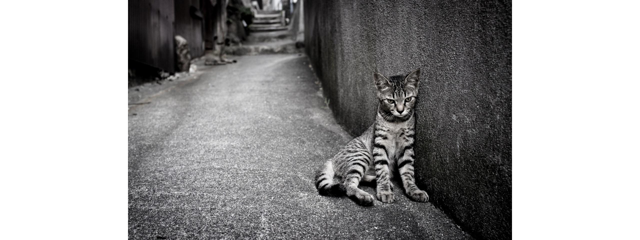 Very Sad Cat   2560x960   749728 2560x960