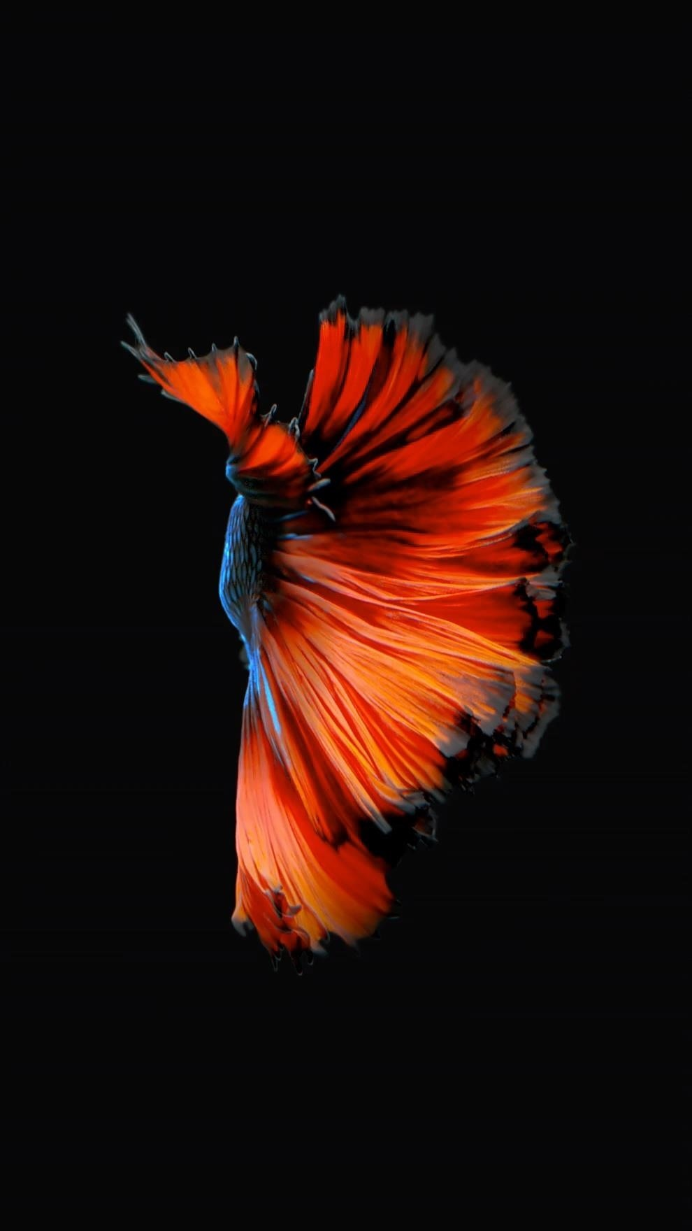 Free Download How To Get Apples Live Fish Wallpapers Back On