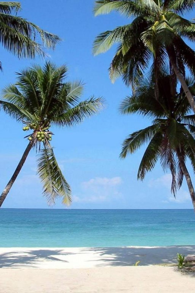 Beautiful Beach Backgrounds Palm Trees Galaxy Wallpaper 7ualcom jpg 640x960