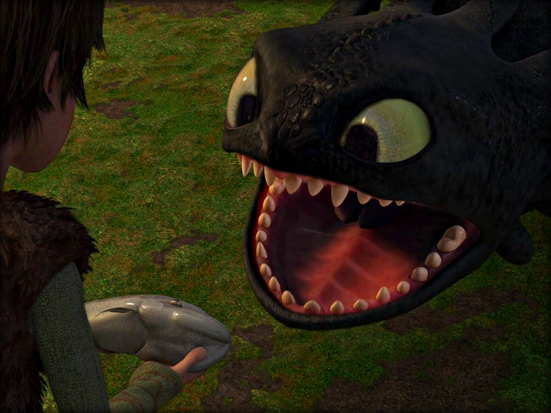 Toothless   Toothless the Dragon Wallpaper 33059180 800x600