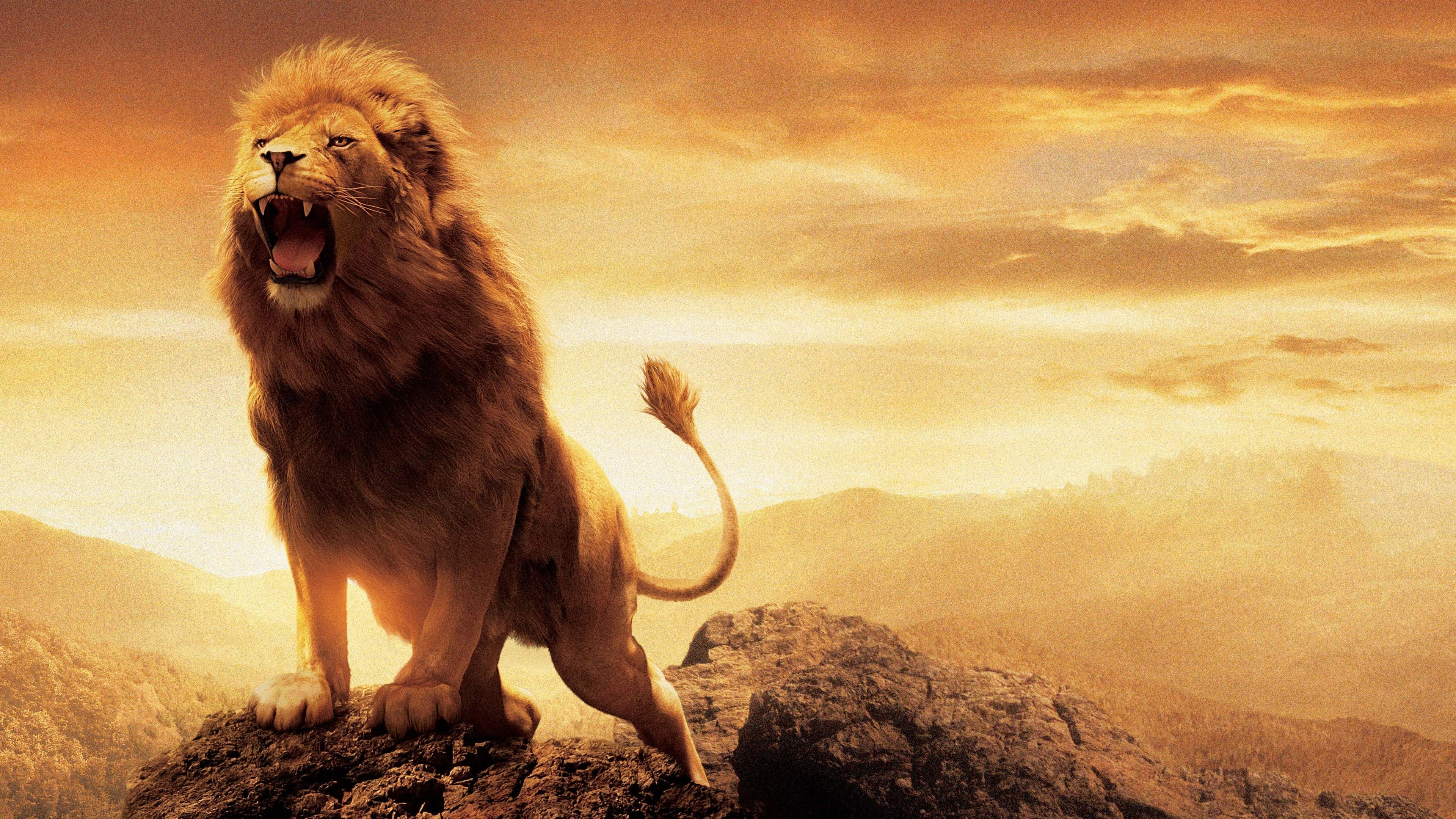 Lion of Judah Wallpaper 3840x2160