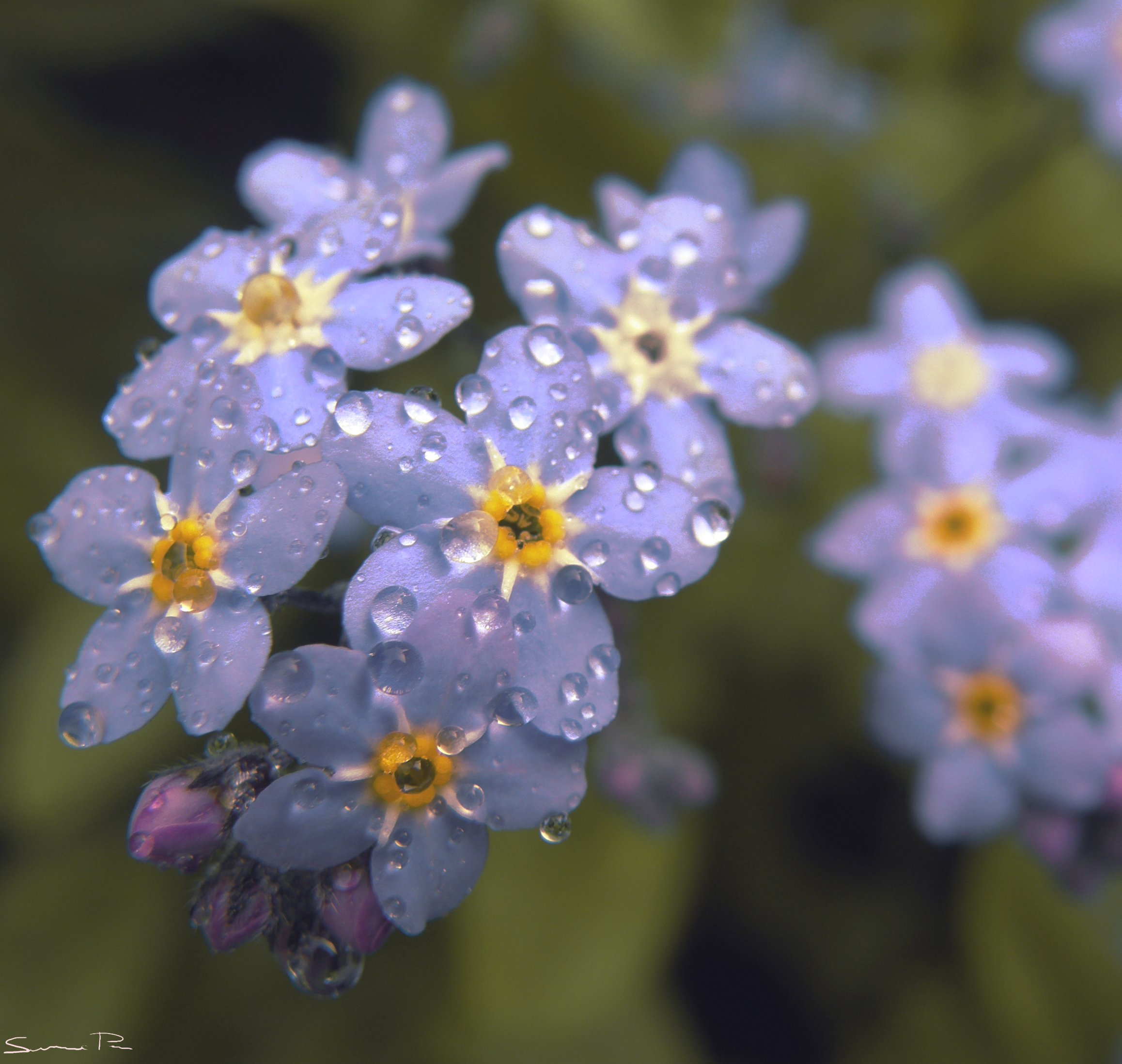 Rainy Day Wallpaper: Spring Rain Wallpaper For Desktop