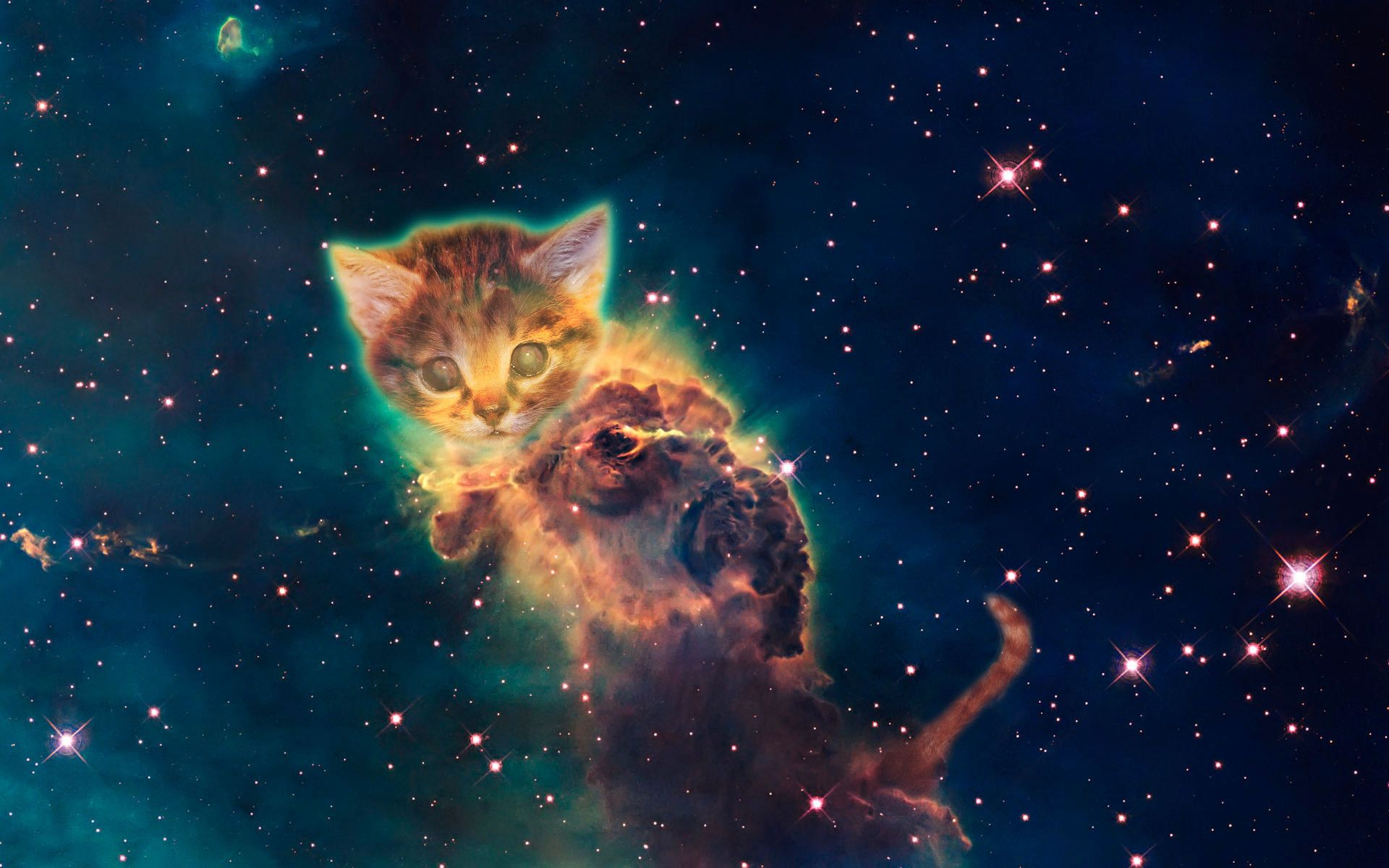 Galaxy Cat Wallpapers   Top Galaxy Cat Backgrounds 1920x1200