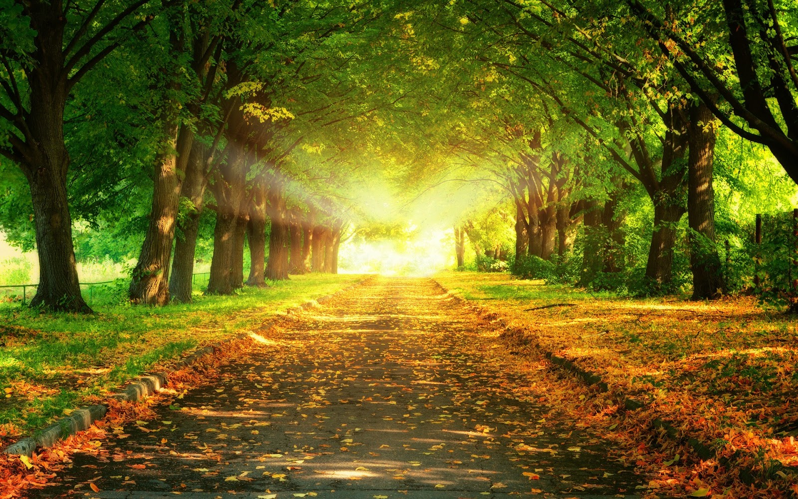 autumn wallpaper fall wallpaper 1600x900 autumn wallpapers hd 1600x1000
