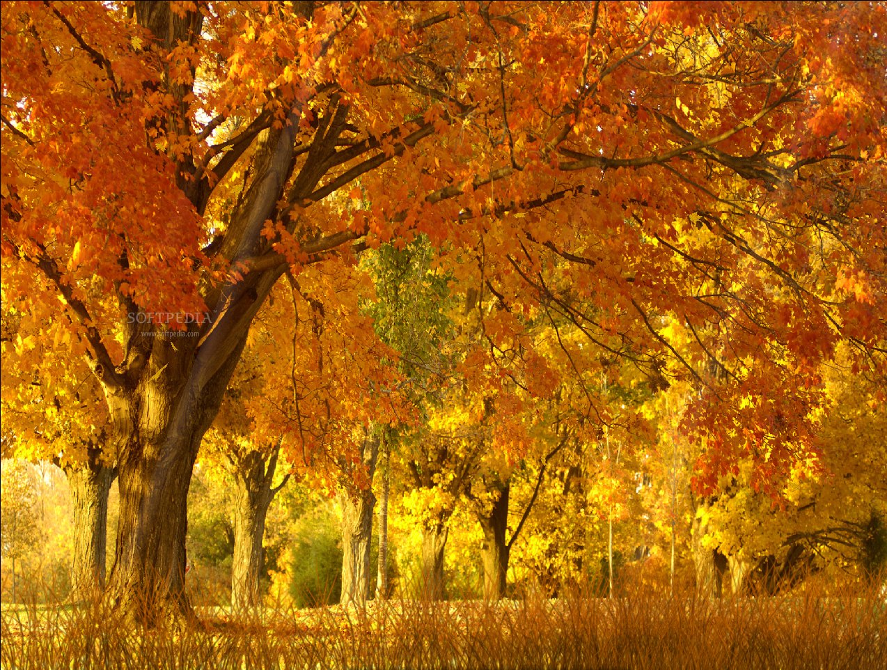 Free Download Fall Season Animated Wallpaper This Is A