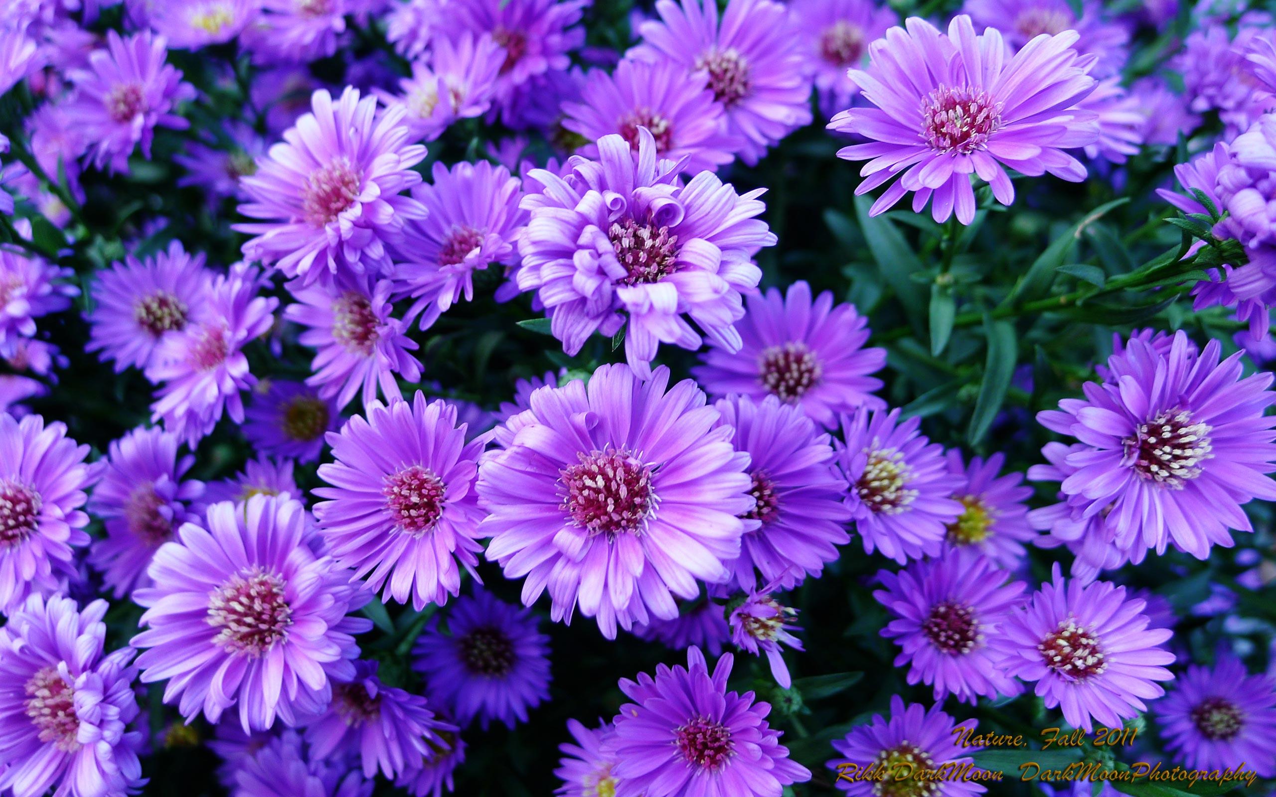 purple flowers widescreen wallpapers walljpegcom 2560x1600