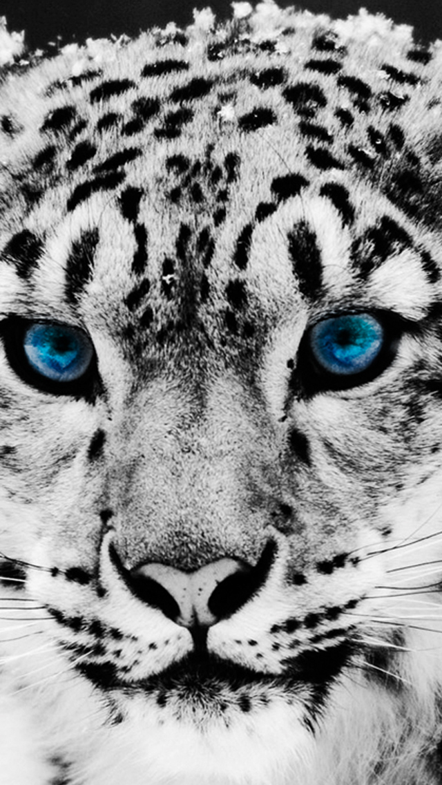 Snow Leopard   The iPhone Wallpapers 640x1136