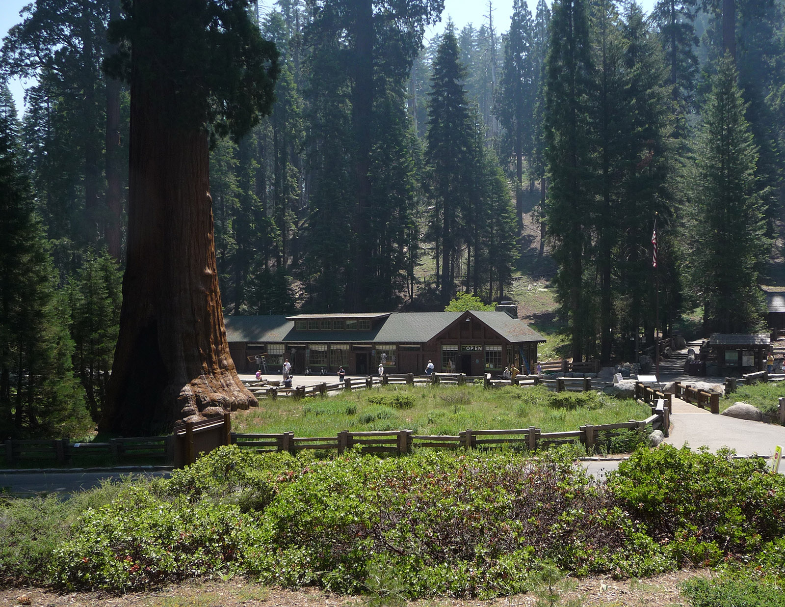 Sequoia National Forest Wallpapers Museum HD 1600x1236