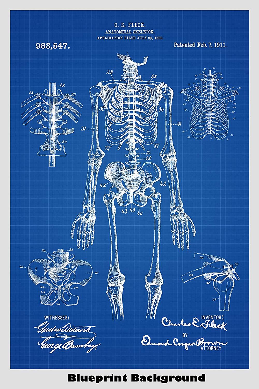 Amazoncom Anatomical Human Skeleton Patent Print Art Poster 1000x1500