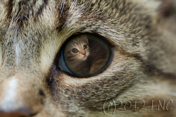 Desktop Wallpaper Are You My Mommy by Ironmountain01 on Etsy 570x380
