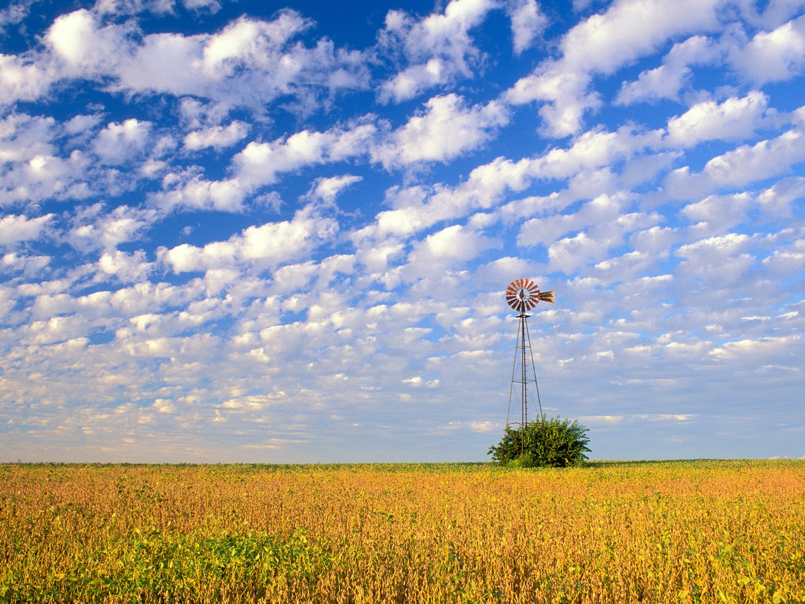 Download Background   Country Field Illinois   Cool 1600x1200