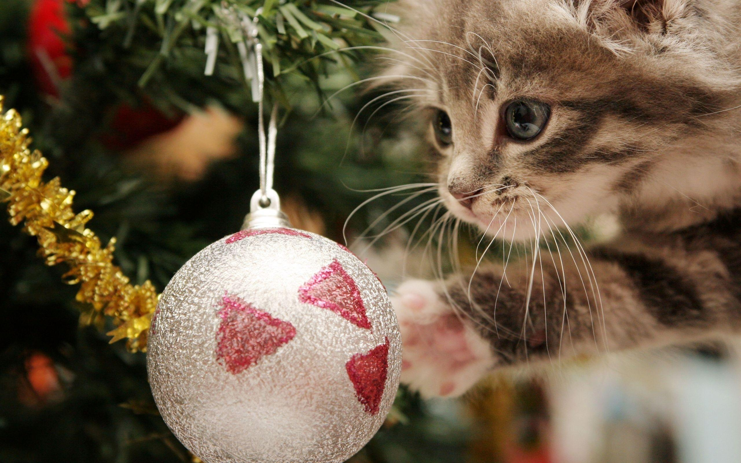 Christmas Cat Wallpapers 2560x1600
