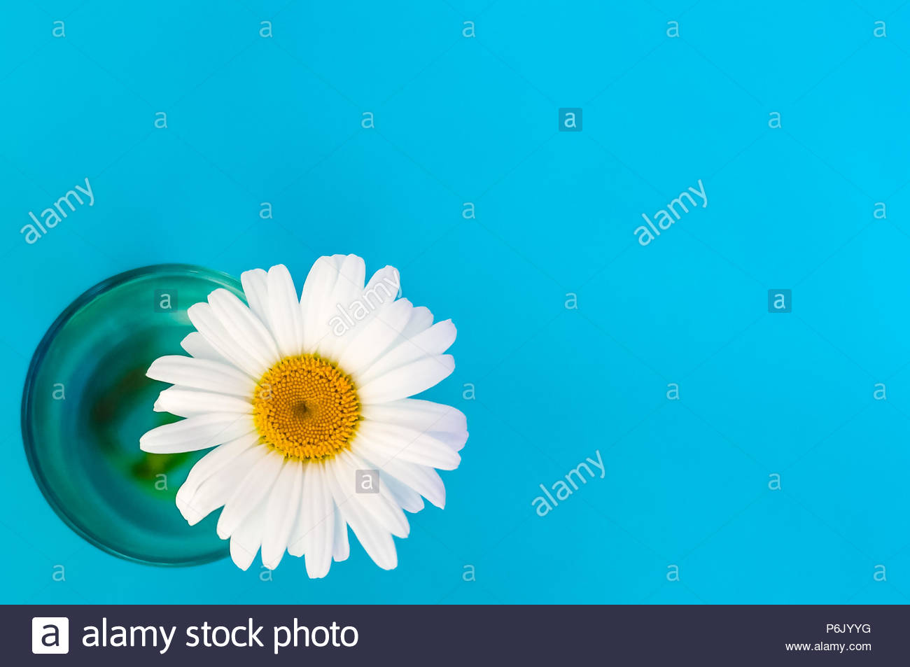 Chamomile flower in a glass on a blue background in the lower left 1300x953
