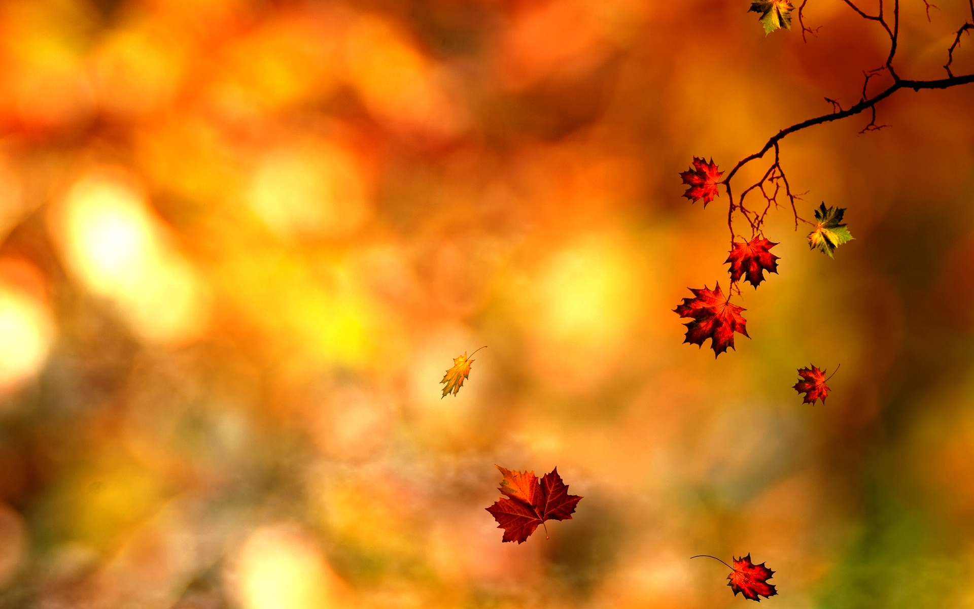 Awesome Autumn Leaf Wallpaper PC 064 2387 Wallpaper Wallpaper 1920x1200