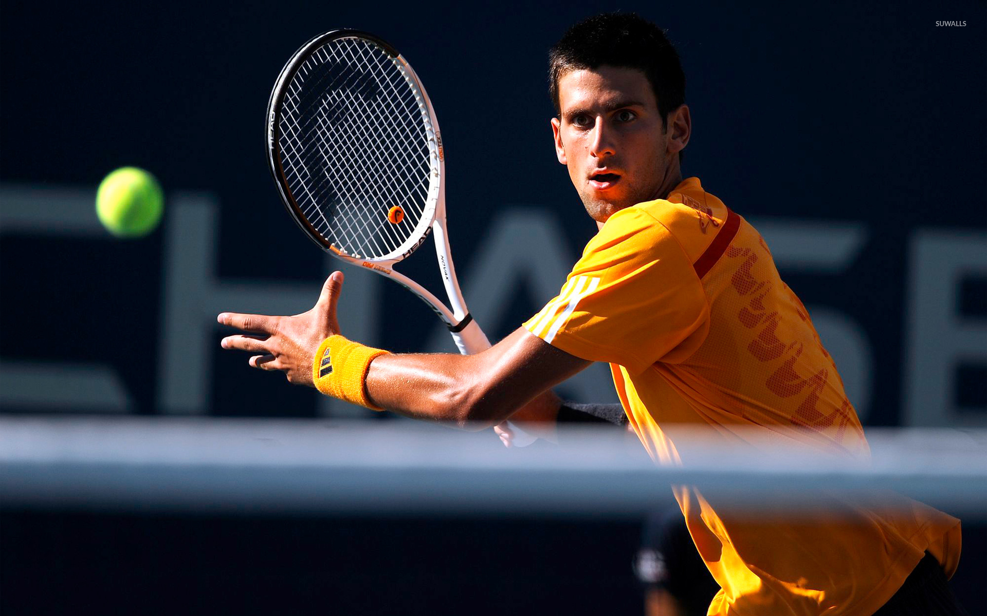 Novak Djokovic wallpaper   Sport wallpapers   2909 1280x800