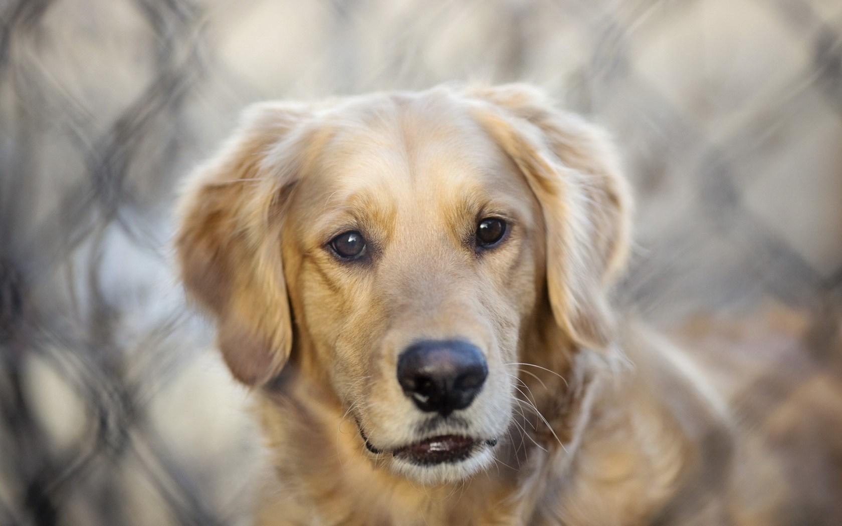 Pics Photos   Dog Background Desktop Wallpaper 1680x1050