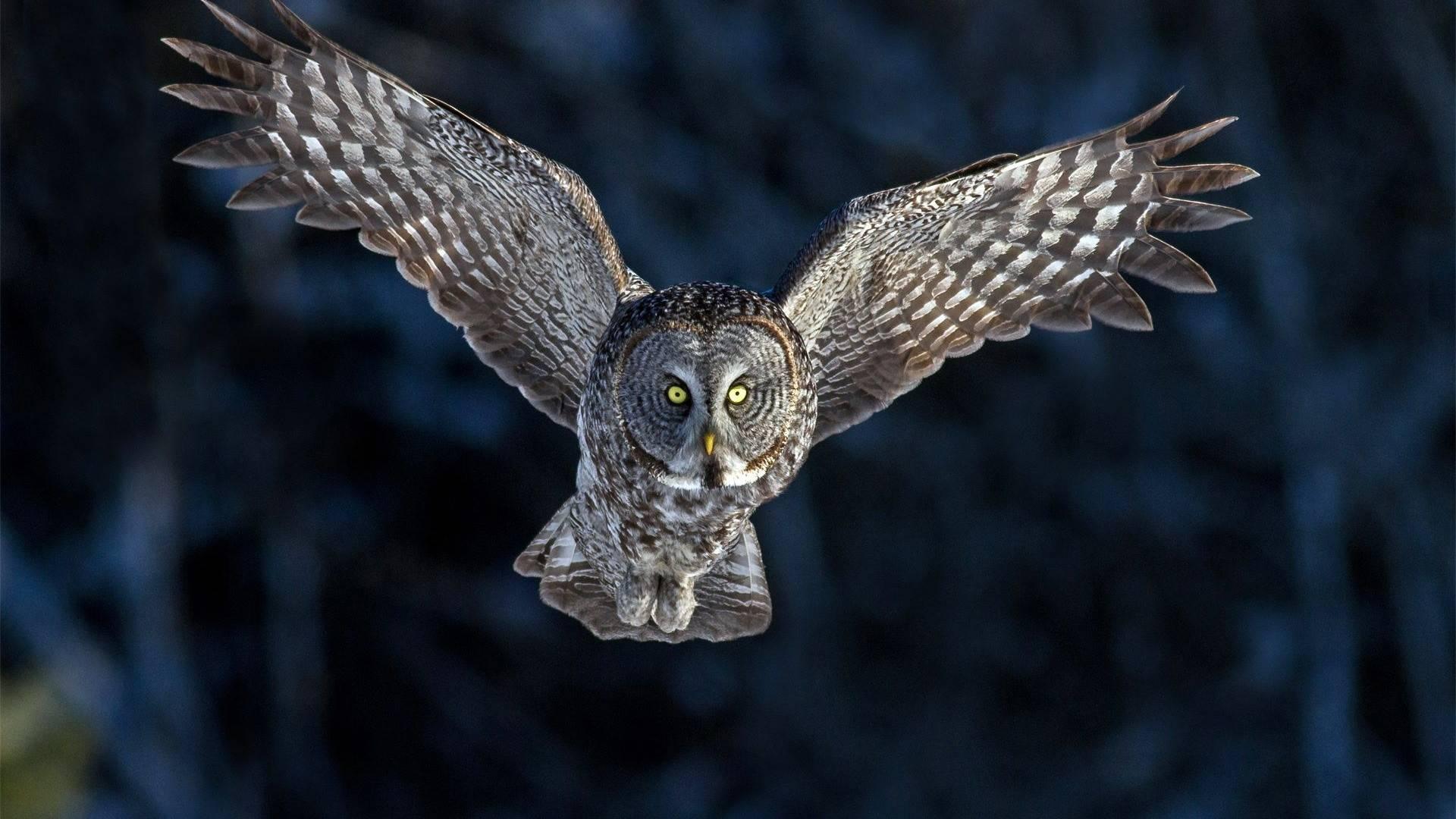 Flying Owl Flying Owl wallpaper 1920x1080