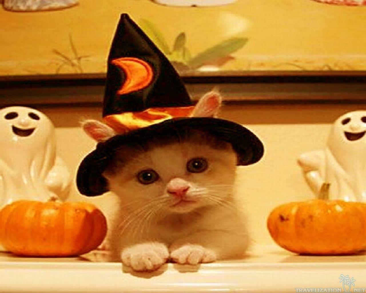 Happy Halloween transforminglifenow 1280x1024