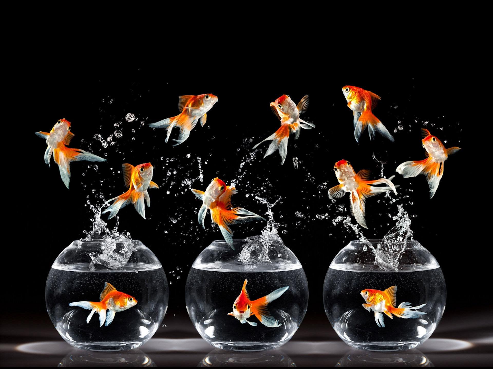 Cirque du Soleil Goldfish Wallpaper   1920x1440 1920x1440
