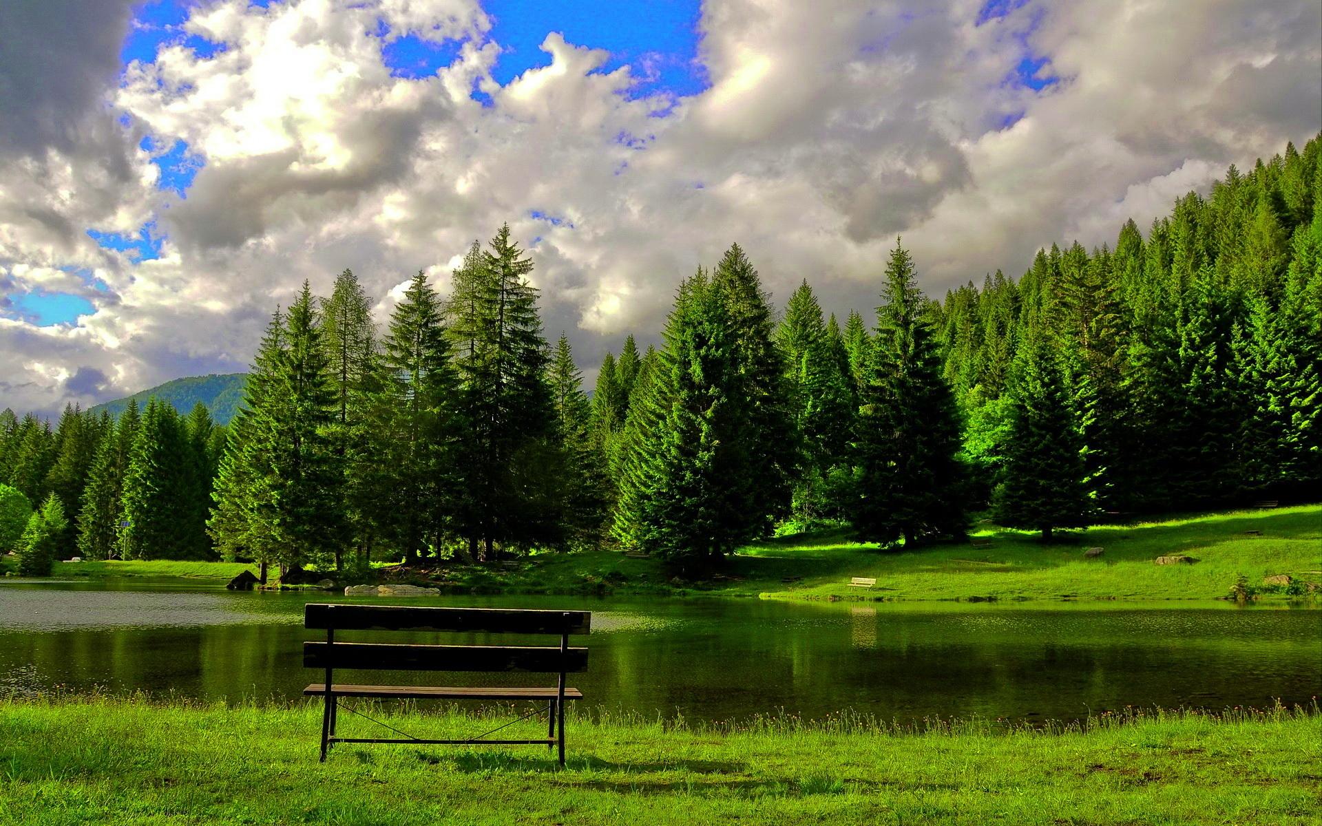 деревья небо озеро  № 3165869 без смс