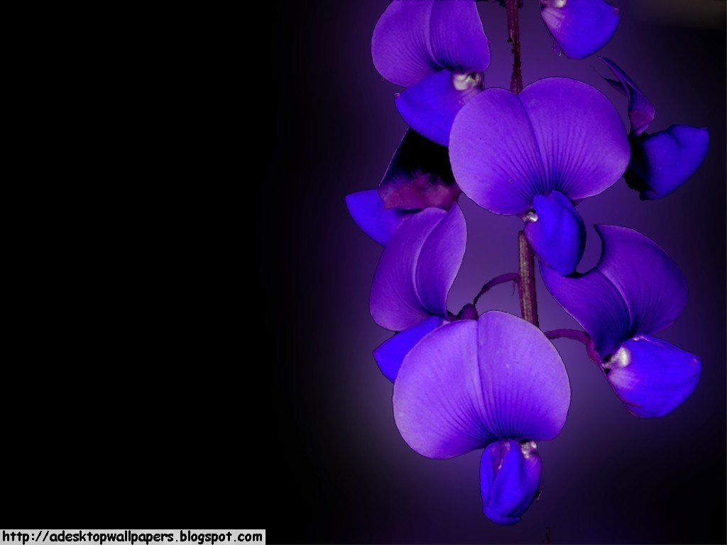 Orchid Flower Desktop Wallpapers PC Wallpapers Wallpaper 1024x768