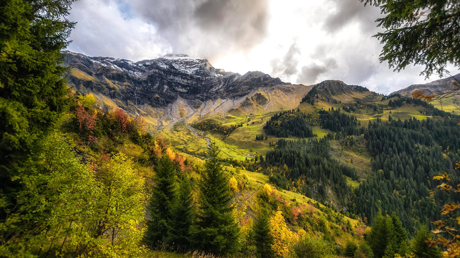 Images Switzerland Interlaken Oberhasli Nature Spruce 1920x1080 1920x1080