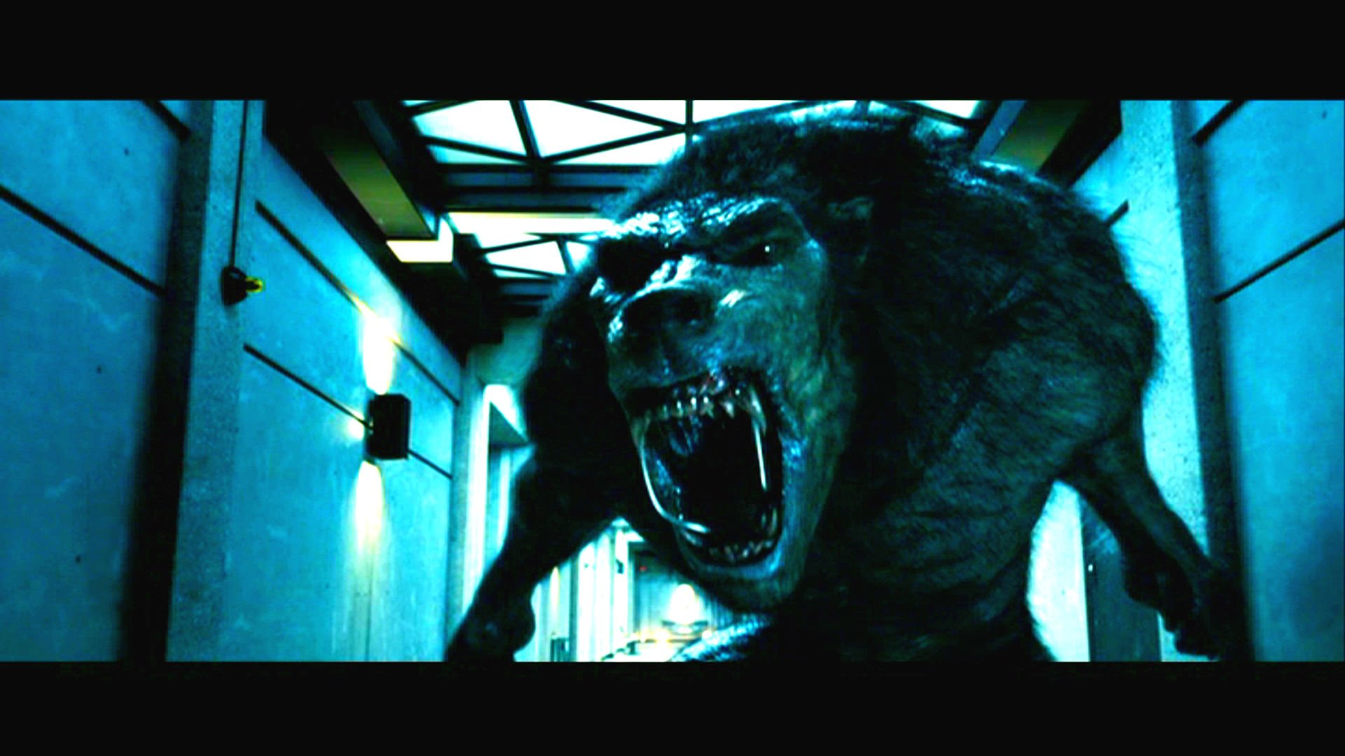 underworld werewolf wallpaper wallpapersafari