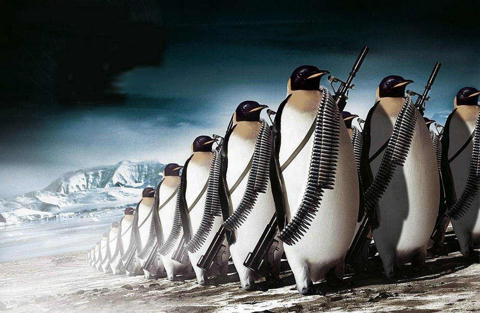 Penguin Army HQ Images Wallpaper Army HD Wallpaper Penguins 1600x1042