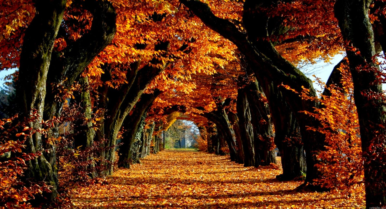 Fall Wallpaper Backgrounds Wallpapers Design 1600x868