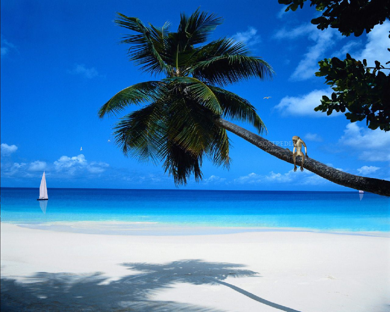 Tropic Paradise   Animated Screensaver Screenshots 1280x1024