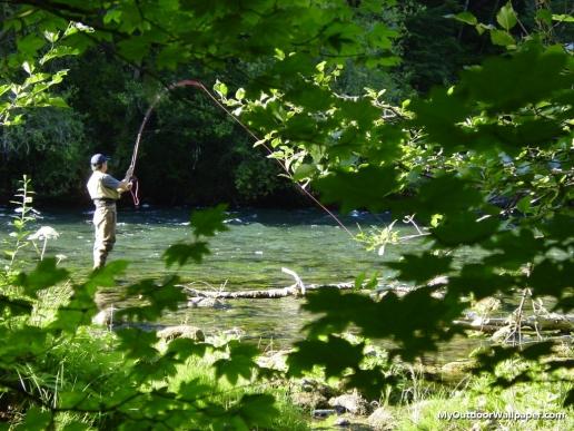Fly fishing mckenzie river Oregon desktop Wallpapers 44 516x387