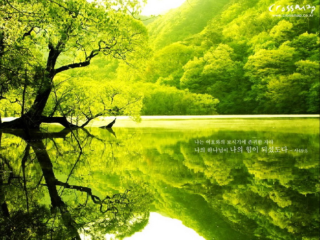 Pictures Super Images Superb Green Color Using Natural WallPapers 650x487