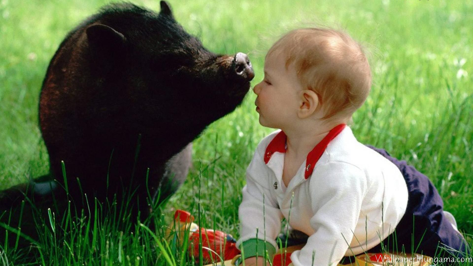 Pig And Baby Kiss Animals are my friends and I dont eat my 1920x1080