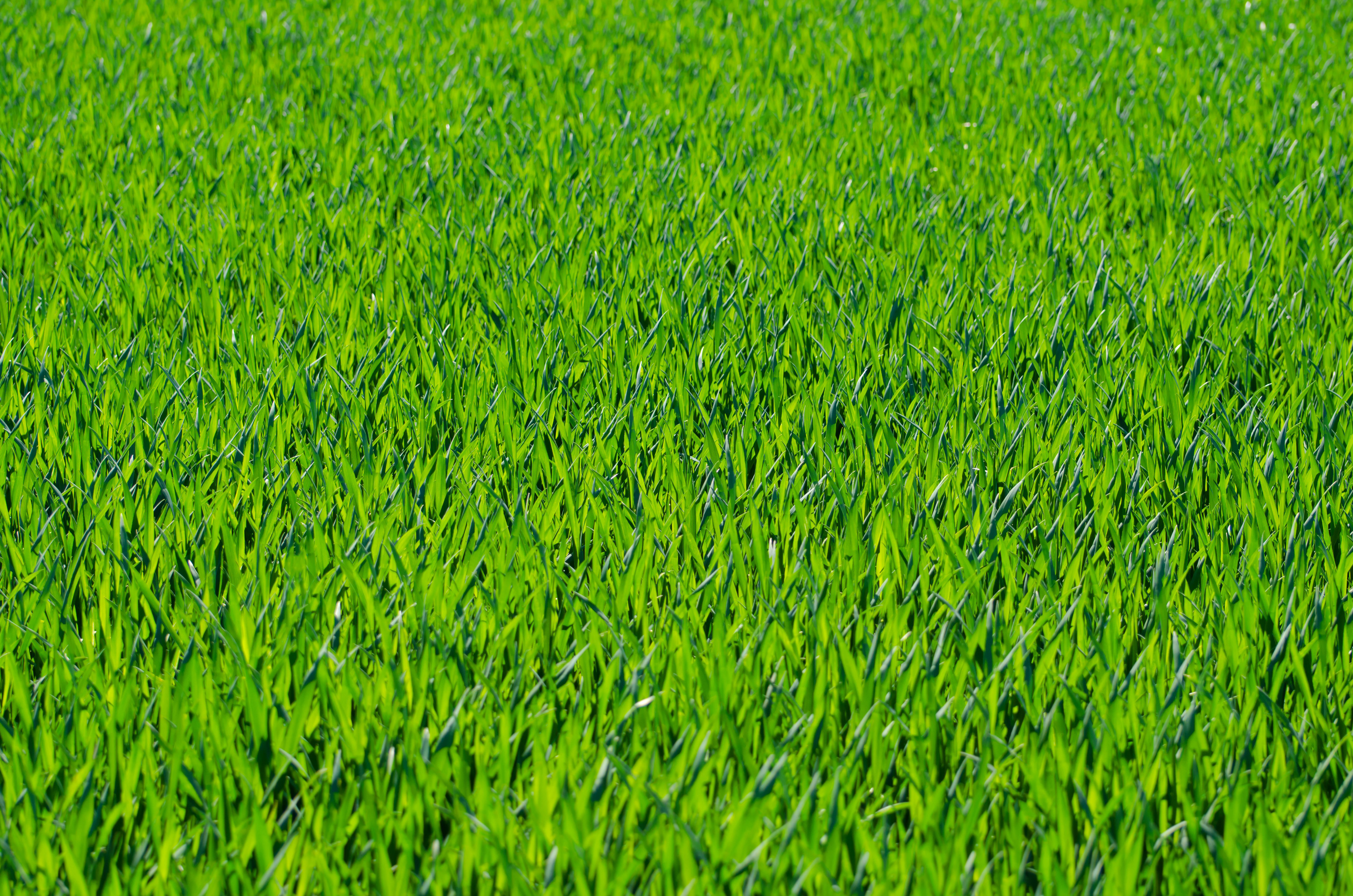 Seven Grass Textures or Lawn Background Images www 5174x3427