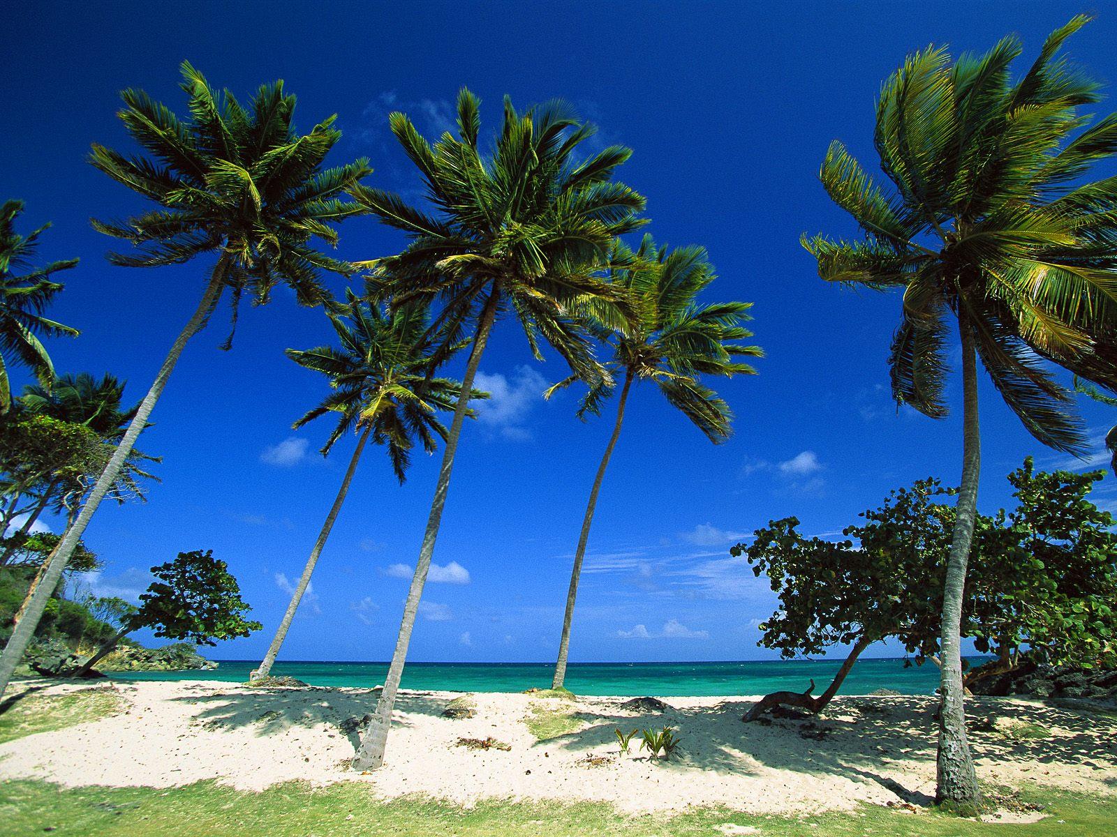 Beach Bacardi Beach Cayo Levantado Dominican Republic 1600x1200