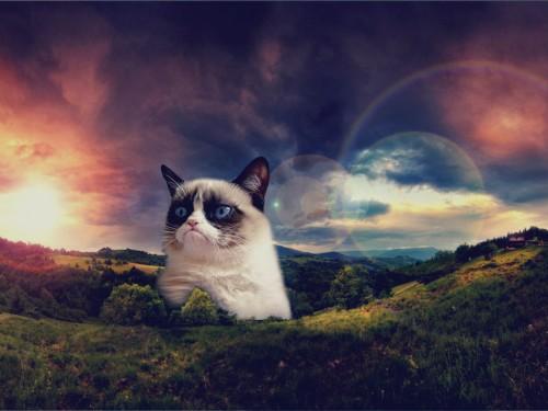Get Your Grumpy Cat Wallpaper 500x375