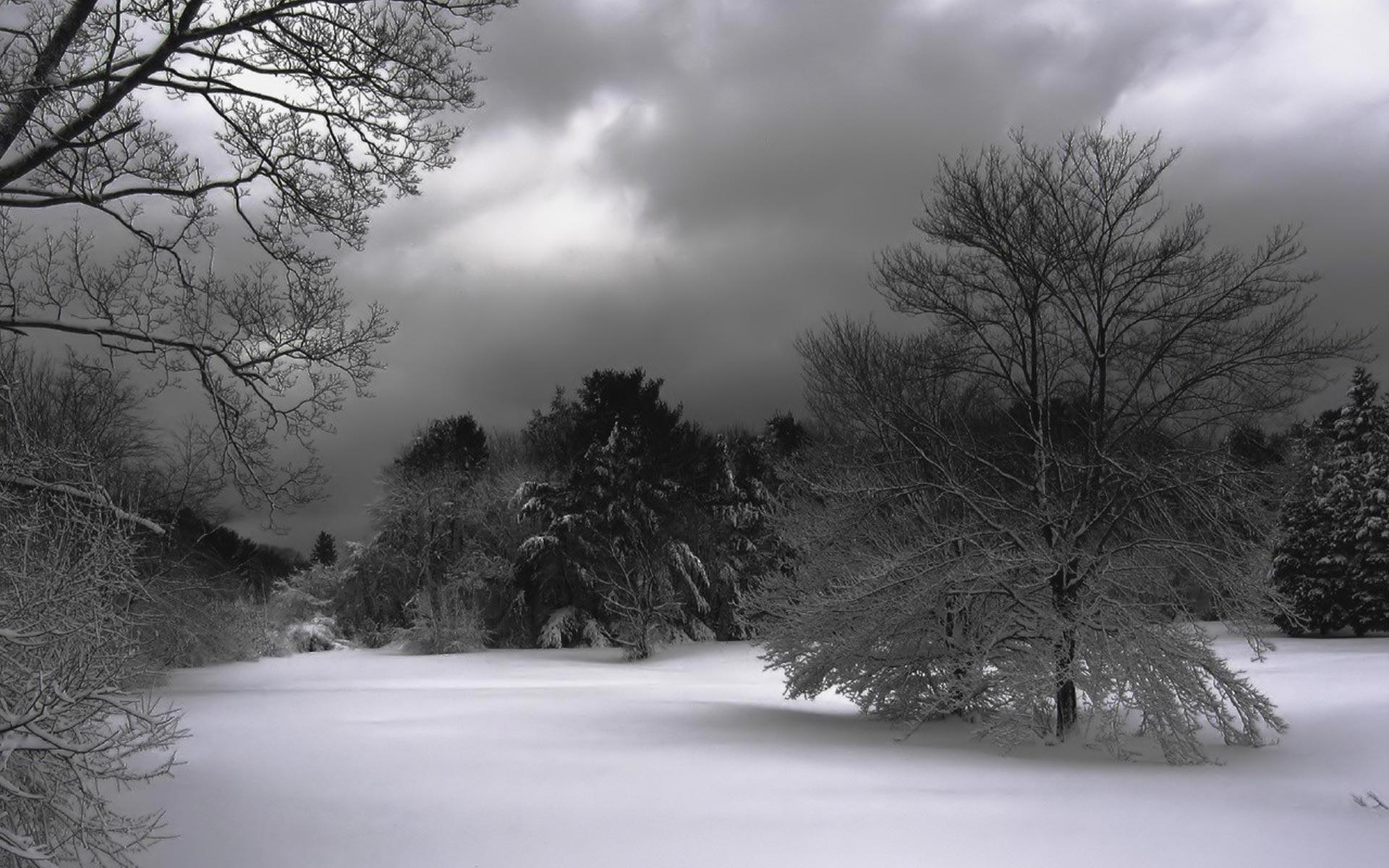 Winter night Widescreen Wallpaper   1900 1920x1200