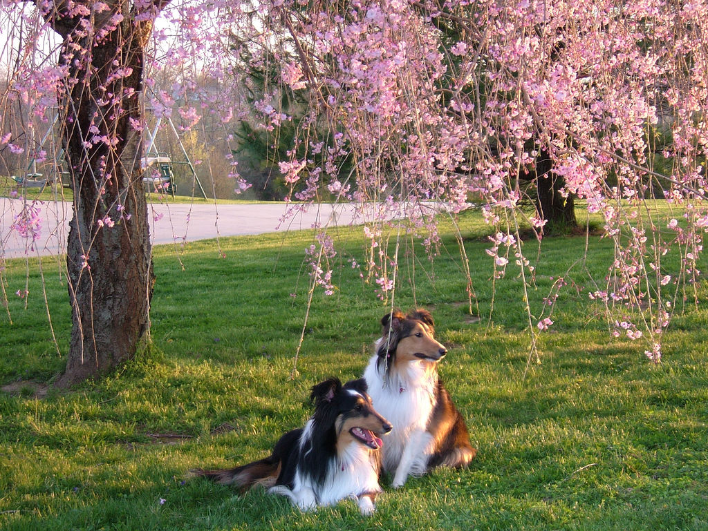 14 Beautiful And Dashing Spring Season Wallpapers In HD HDhut 1024x769