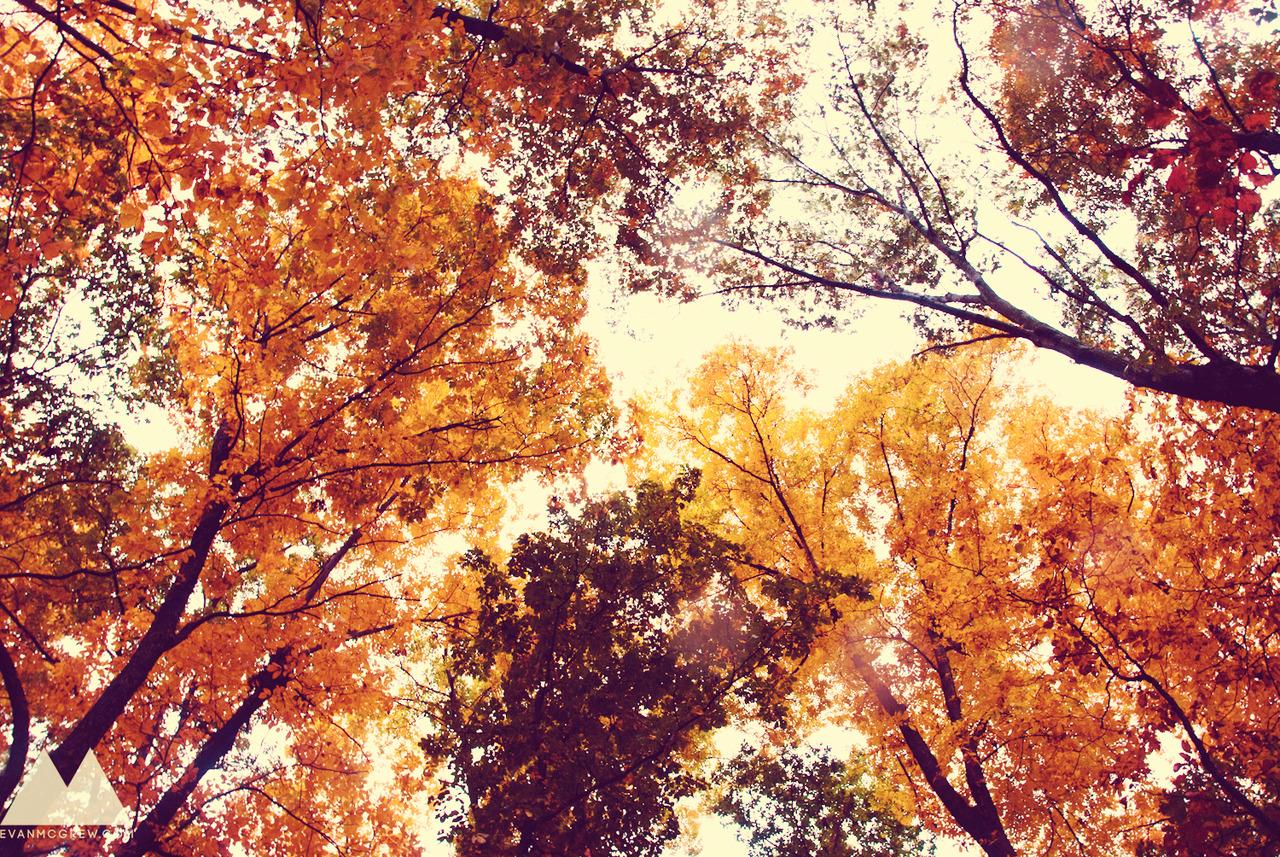 Evan McGrew Fall in Harrisonburg VA 1280x857