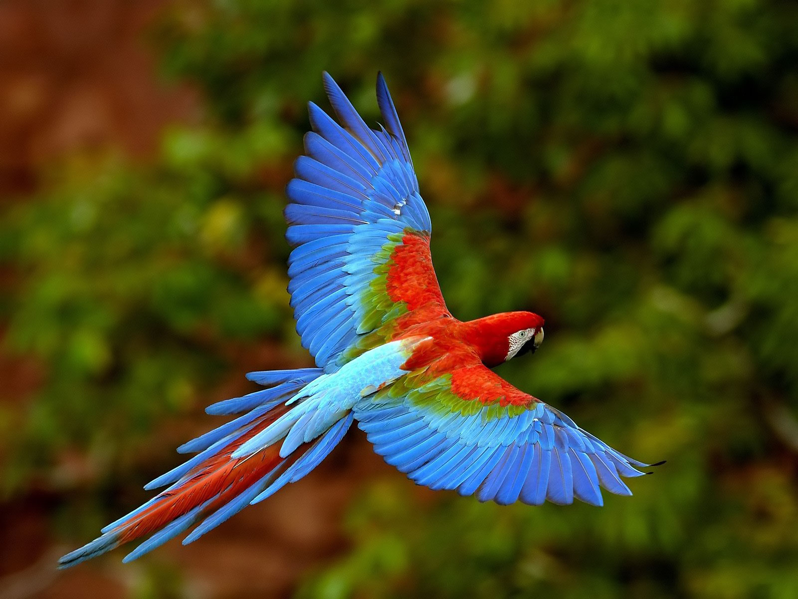 All Wallpapers Parrot Hd Wallpapers 1 1600x1200