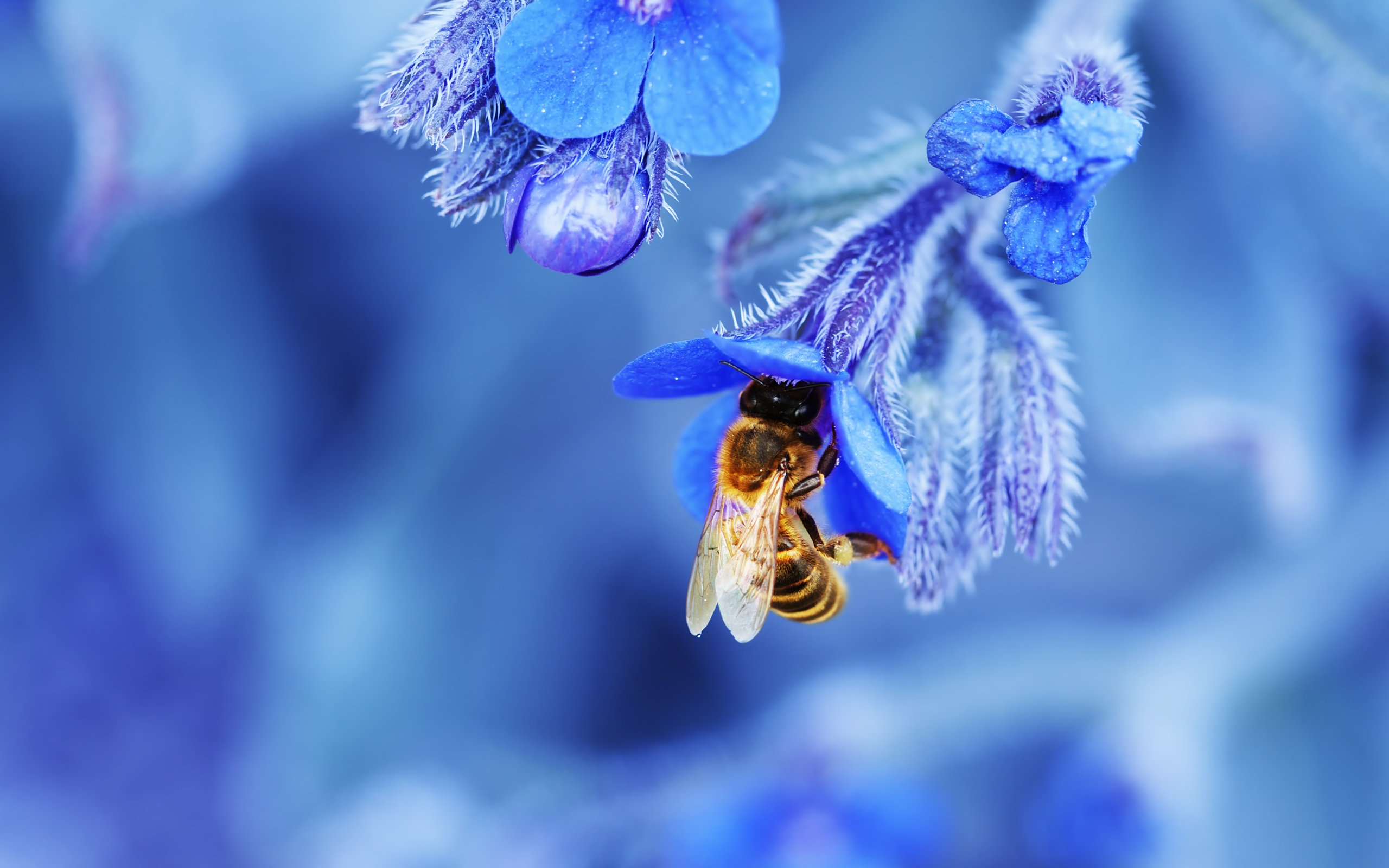 Cool Bee On Blue Flower Wallpaper 12919 Wallpaper WallpaperLepi 2560x1600