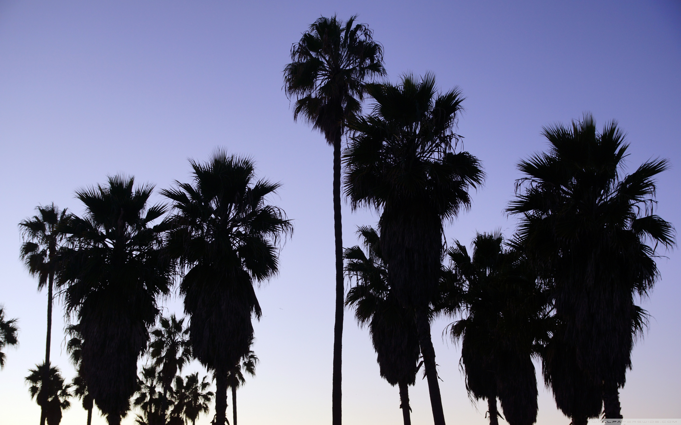 Palm Trees Venice Beach Los Angeles 4K HD Desktop Wallpaper 2880x1800