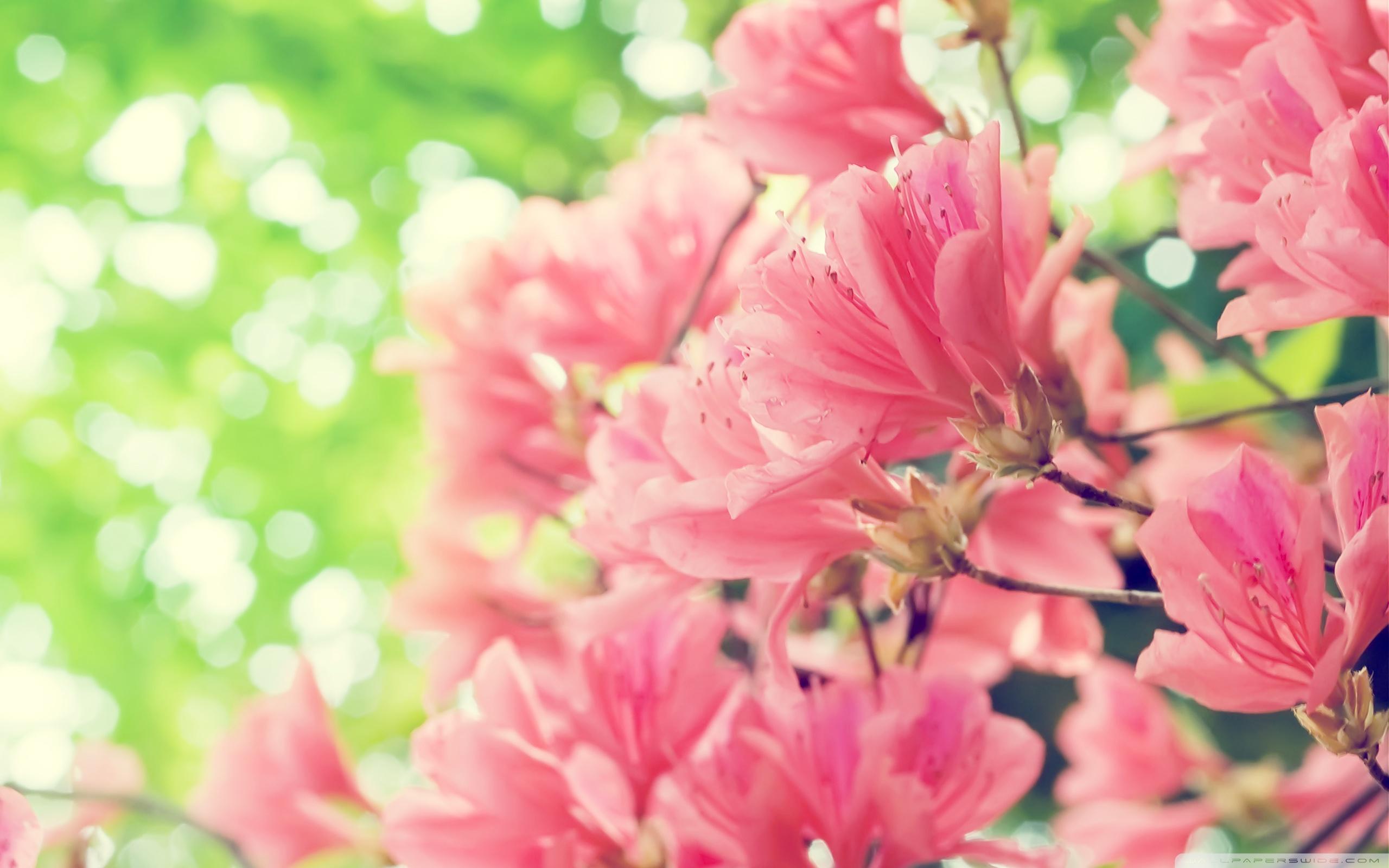 Beautiful Spring Flowers Ultra HD Desktop Background Wallpaper for 2560x1600