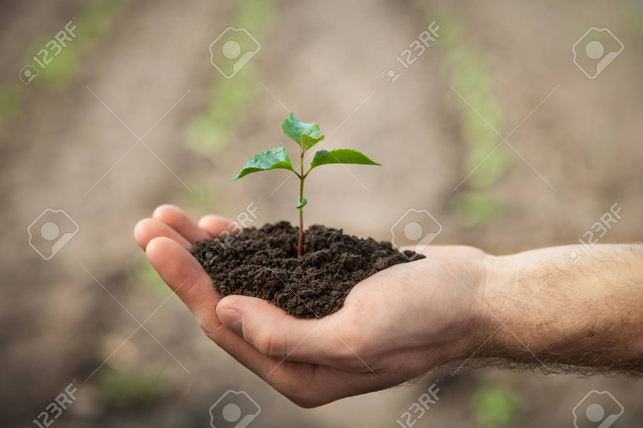 Hands Holding Sapling With Soil On Green Background Stock Photo 1300x866
