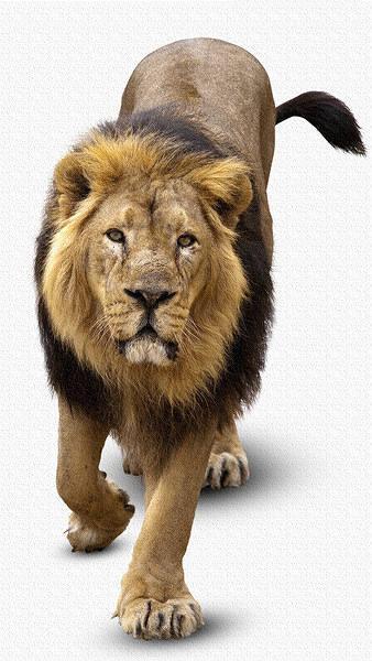 Lion iPhone 6S Plus Wallpaper 338x600