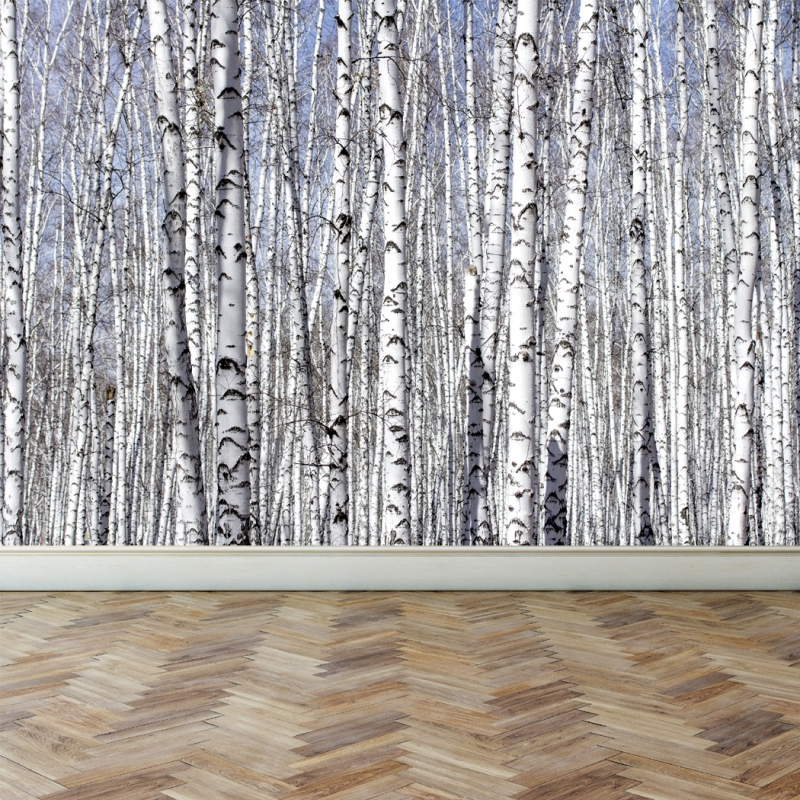Free Download White Birch Trees Peel And Stick