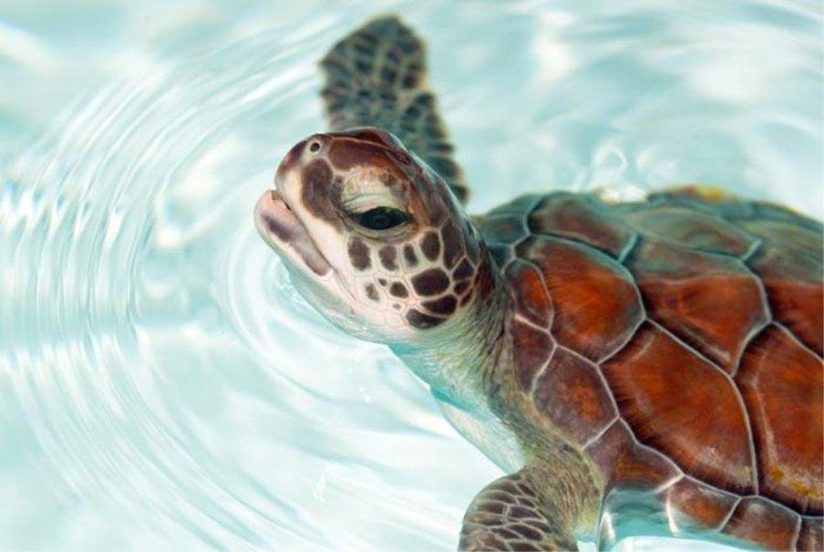 beb tartaruga Vetor   ForWallpapercom 904x605