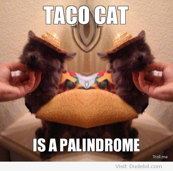 taco cat is a palindrome 1 555x549