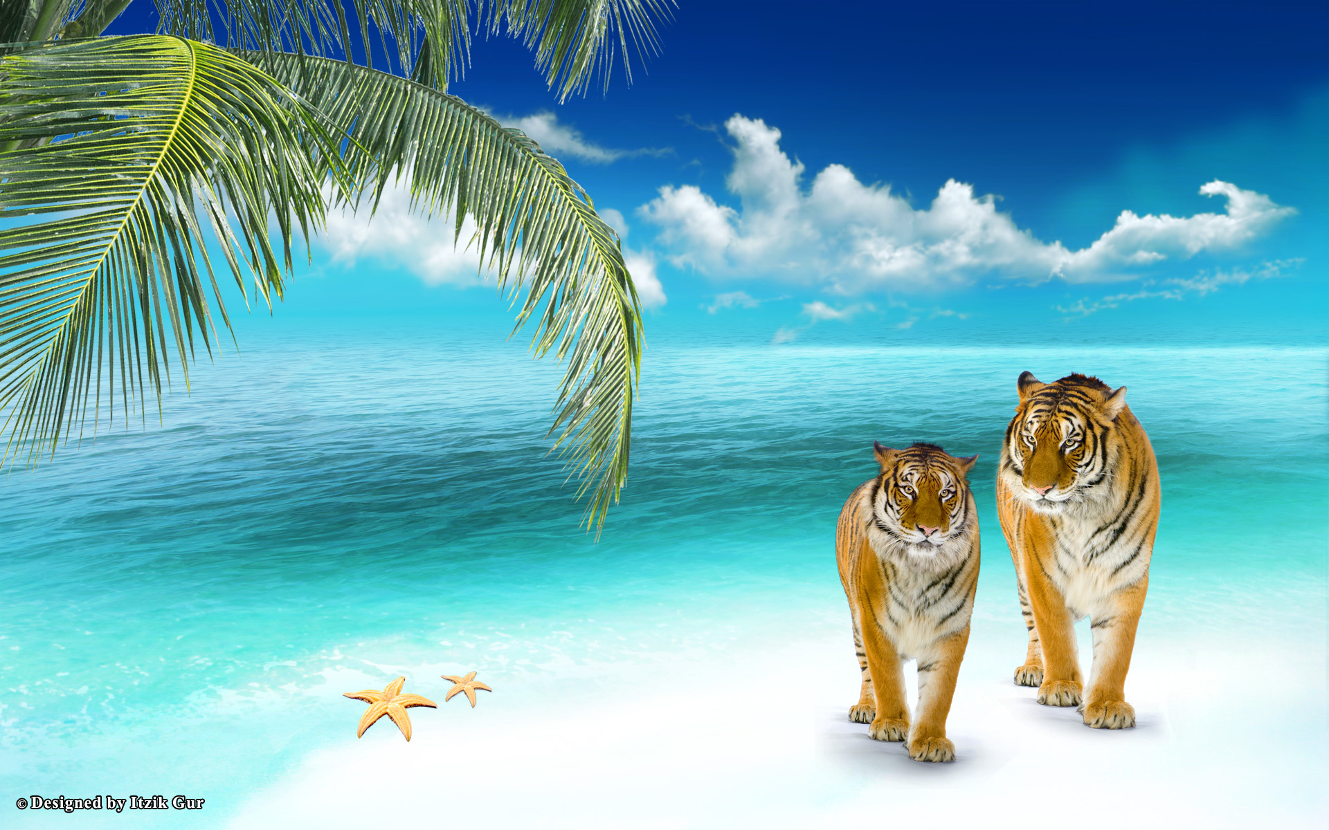 beach elephant tigers animals animal desktop wallpaper download beach 1920x1200